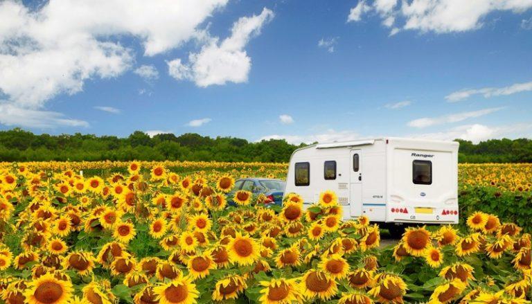 Caravan in zonnebloemveld