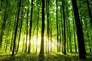 Ban van het bos