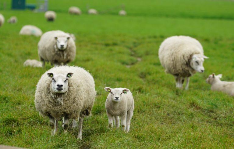 Texel: tips om te doen op hét schapeneiland