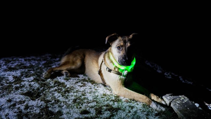 's Avonds veilig wandelen met je hond - Toeractief