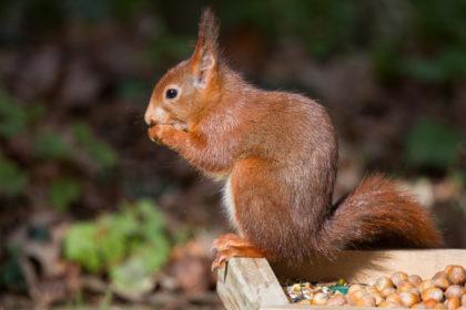 Blog Mark Kras eekhoorns