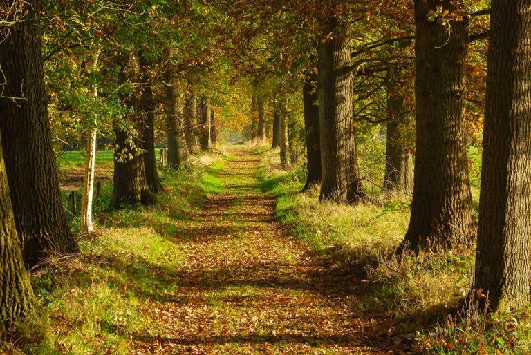 Wandelen door de natuur en over boerenland doe je met de Klompenpaden - Wandelen met Toeractief