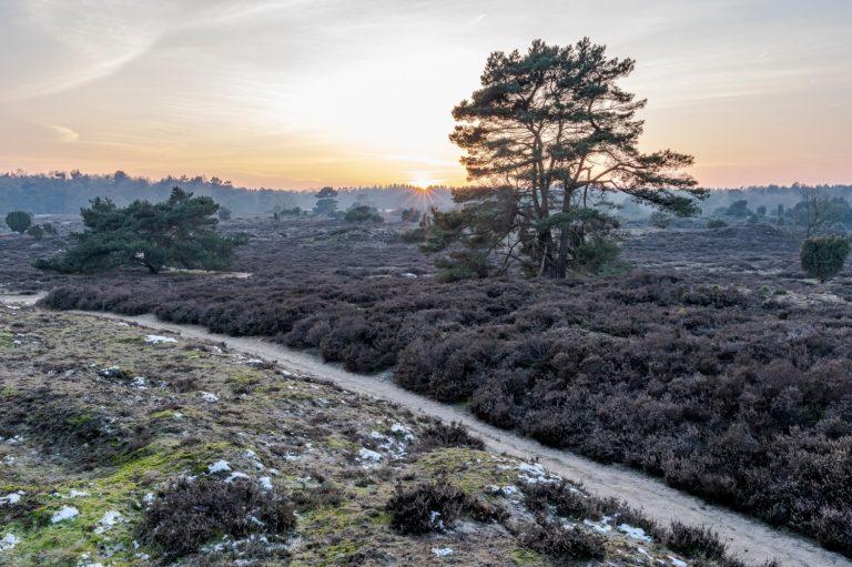 Nederlandse heuvels