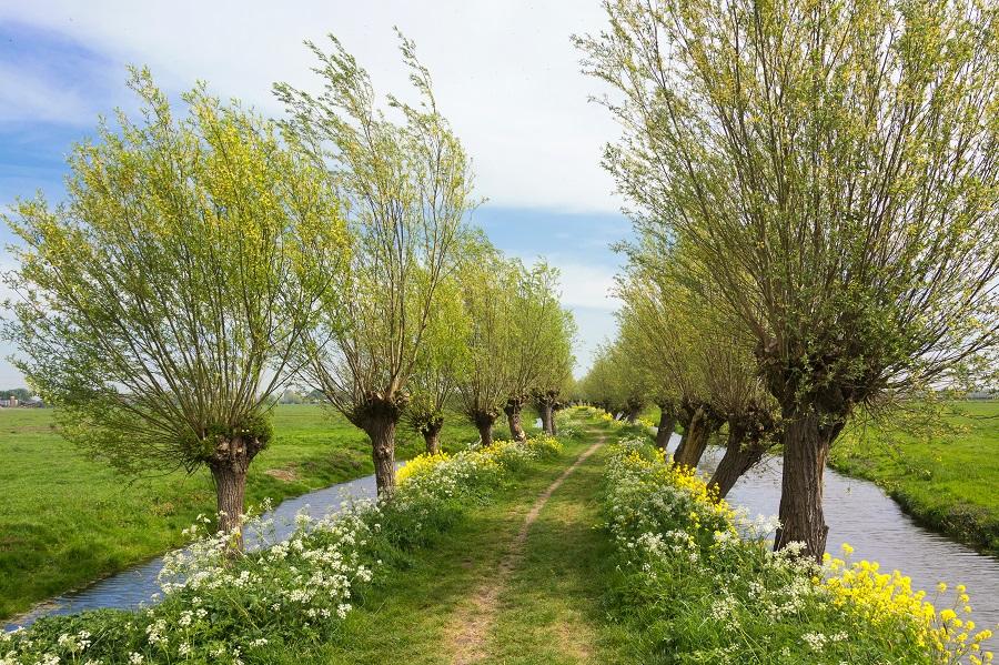 knotwilgen tref je veel aan langs landbouwgrond - landschappen met Toeractief