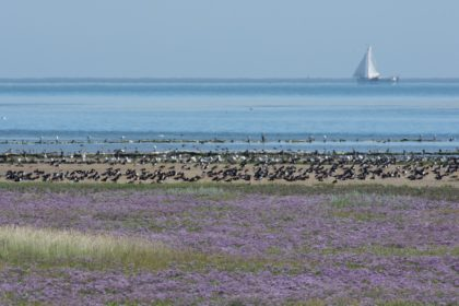 Nederlandse landschappen: kleigrond. Hier vind je weer een unieke flora en fauna - Toeractief