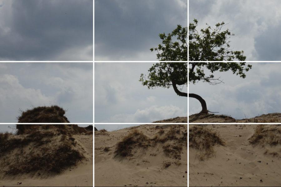 Tips voor mooie natuurfoto's