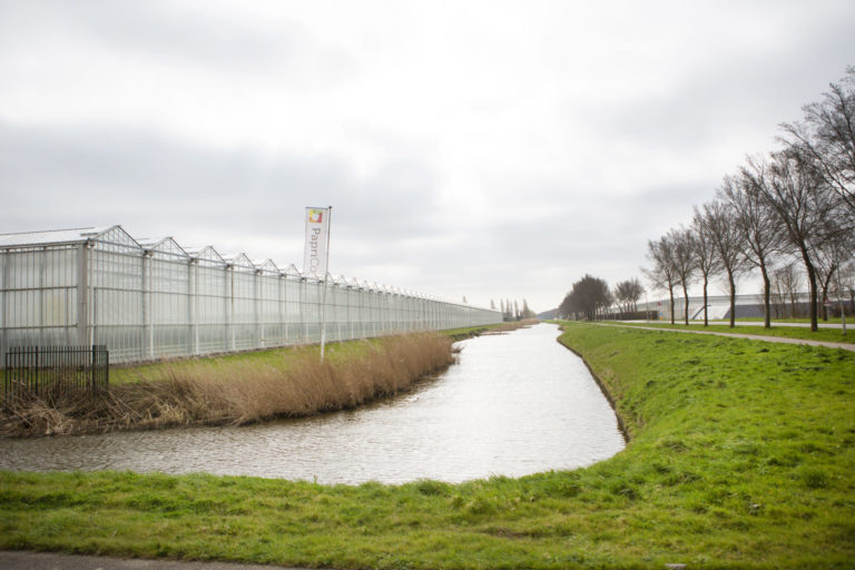 Kassen in West-Friesland