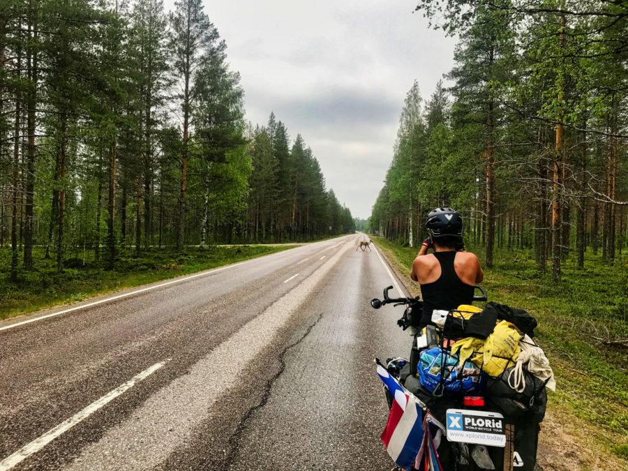Rendieren in Finland