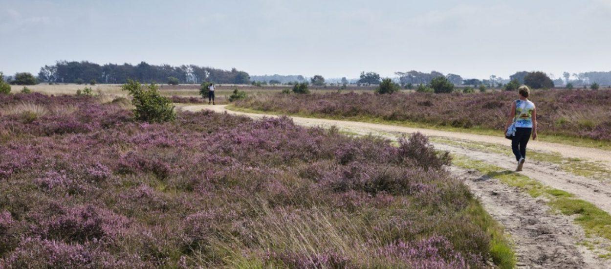 Natuurgebied Noord-Brabant